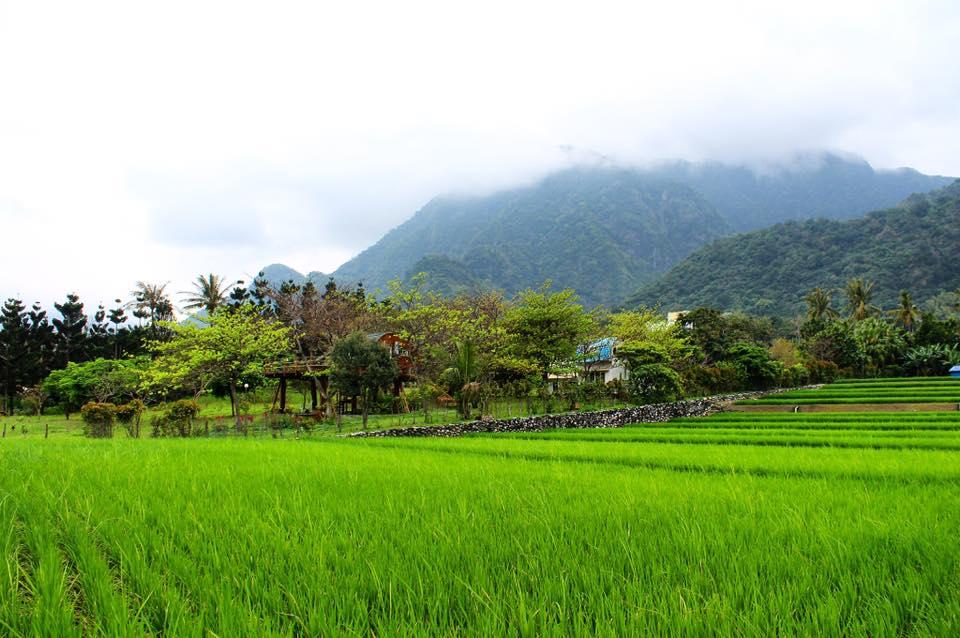 taitung farm